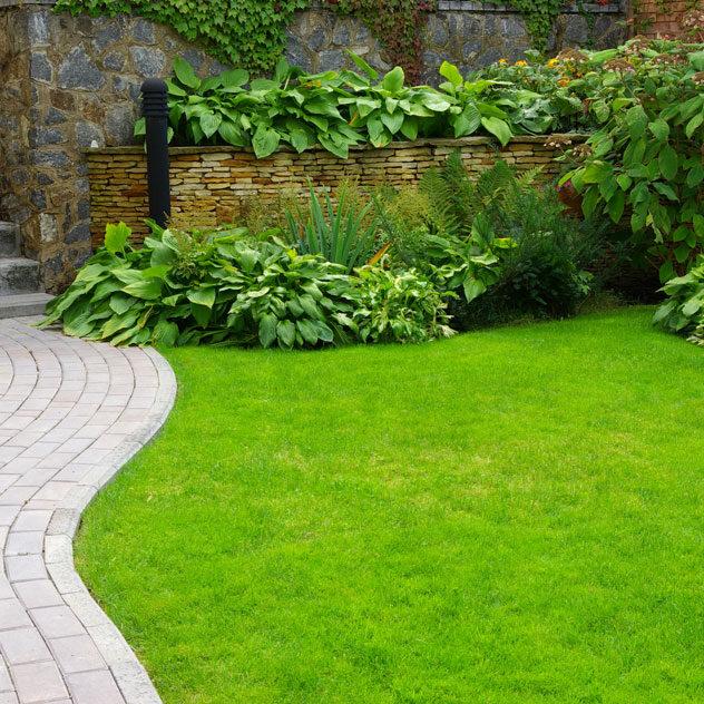 landscaping brick path hostas